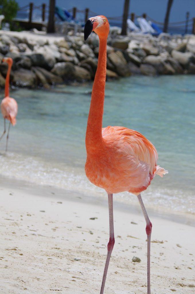 Top 10 van de leukste excursies op Aruba